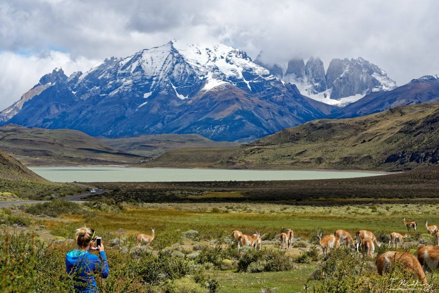 Jižní Amerika - lama sem, lama tam